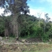 Belize Residential Lots in Forest Reserve1