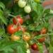 Veggie garden (1)