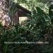 Belize-Bungalow-Rental-Jungle-Belize5