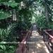 Belize-Bungalow-Rental-Jungle-Belize6