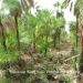 24.99 Acres on Turneffe Atoll2