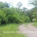 6 Acres Land Paslow Falls Cayo District6