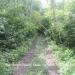 6 Acres Land Paslow Falls Cayo District9