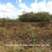 Large Half Acre Lot in Belmopan2