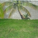 belize-twin-palms-2